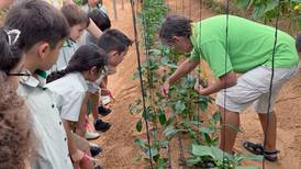 Crops to classrooms: how Dubai pupils show the way with sustainable farming project