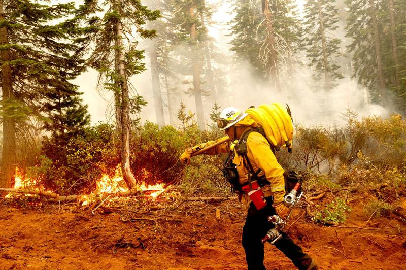 Cal Fire Battalion Chief Craig Newell carries hose while battling the North Complex Fire in Plumas National Forest, Calif., on Monday, Sept. 14, 2020. (AP Photo/Noah Berger)
