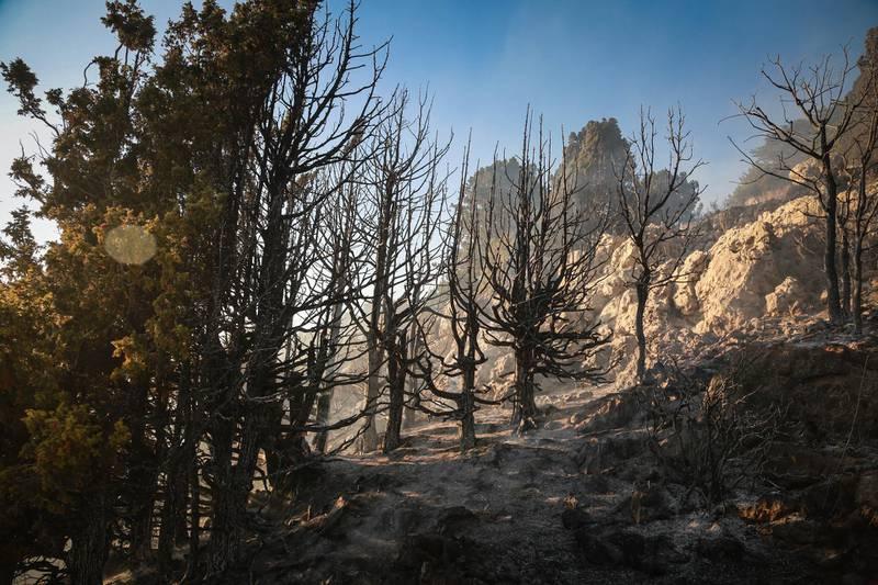 Burned trees in Jird Meshmesh, in Lebanon's Akkar region on Aug. 24, 2020