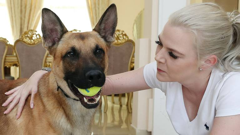 An image that illustrates this article Hundreds want to adopt Dubai Police's retired patrol dogs