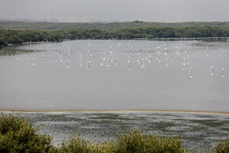 AJMAN, UAE. April 7, 2015 - Natural mangroves will be a feature in Al Zorah's premier waterfront and lifestyle development project in Ajman, April 7, 2015. (Photos by: Sarah Dea/The National, Story by: Lucy Barnard, Business) *** Local Caption ***  SDEA070315-alzorah03.JPG