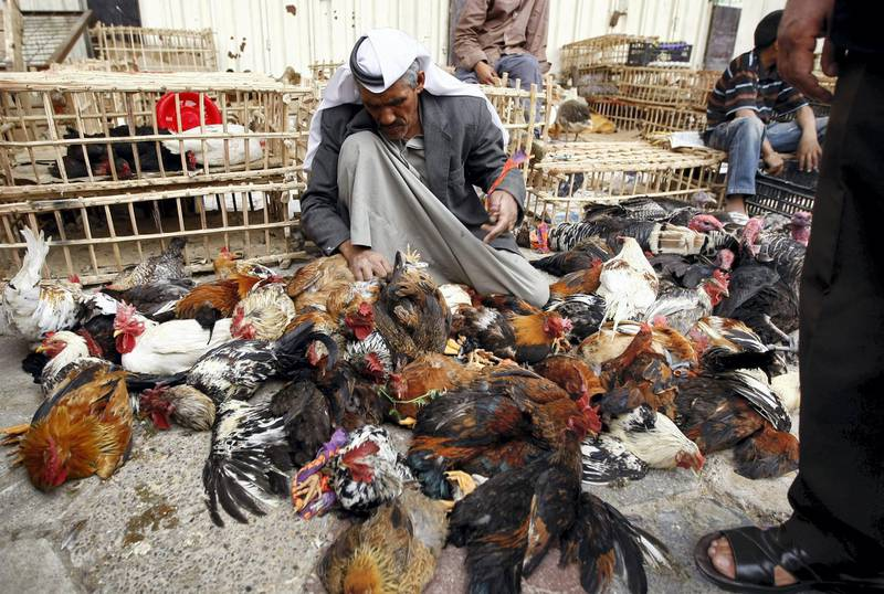 An Iraqi vendor sets loose his chickens and roosters at al-Ghazel market in Baghdad on March 20, 2009. The market, which is specialised in selling all kinds of domestic and wild animals, opens only on Fridays. Since the US-led invasion of Iraq, it has been targeted in several attacks, leading to the death of hundreds of Iraqis. AFP PHOTO/AHMAD AL-RUBAYE (Photo by Ahmad AL-RUBAYE / AFP)