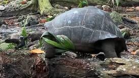 'Vegetarian' giant tortoise becomes a killer