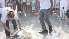 Rescued turtles released back into the sea in Dubai