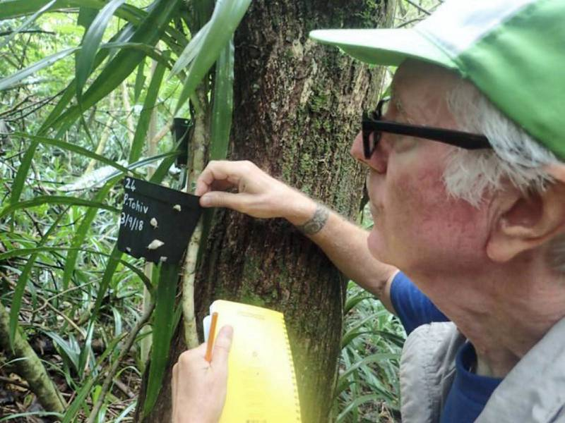 MBZ Fund grantee recipient Dr. Trever Coote releasing the Critically Endangered Polynesian tree snail, or Partula, on the island of Moorea (Credit: Trevor Coote)