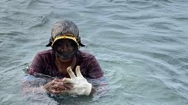 Meet the female seaweed divers of Tamil Nadu: 'Our life is very tough'