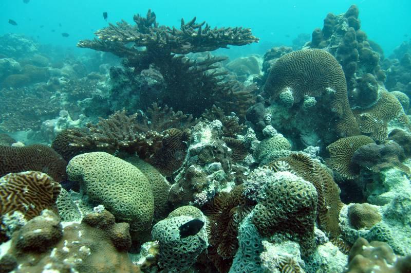 Provided photo of Ras Ghanada coral reef in Ghantoot, UAE.Courtesy John Burt *** Local Caption ***  RasGhanada_18Apr10_37.JPG