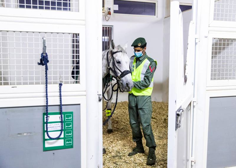 DUBAI, UNITED ARAB EMIRATES. 16 APRIL 2020. Dubai Mounted Police officers, in Al Aweer, saddle their horses as they prepare to patrol residential and commercial areas to insure residents are staying safe indoors during COVID-19 lockdown. They patrol the streets from 6PM to 6AM.The officers of the Dubai Mounted Police unit have been playing a multifaceted role in the emirate for over four decades. The department was established in 1976 with seven horses, five riders and four horse groomers. Today it has more than 130 Arabian and Anglo-Arabian horses, 75 riders and 45 groomers.All of the horses are former racehorses who went through a rigorous three-month-training programme before joining the police force. Currently, the department has two stables – one in Al Aweer, that houses at least 100 horses, and the other in Al Qusais, that houses 30 horses.(Photo: Reem Mohammed/The National)Reporter:Section: