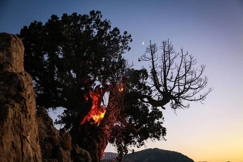 A burning juniper tree Jird Meshmesh, in Lebanon's Akkar region on Aug. 24, 2020