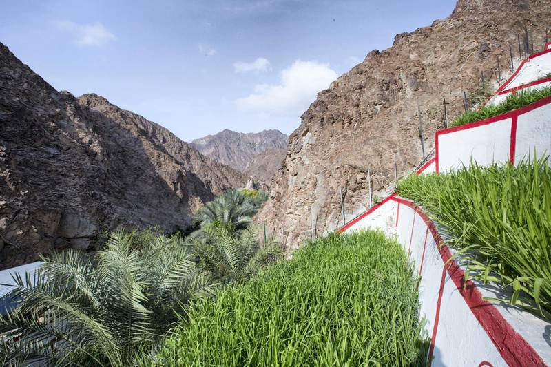 Sharjah, United Arab Emirates-  Inside Bahbooh Hanging Gardens with fruits and different plants at a different levels  along the hillside at Al Nahwa Village in Sharjah.  Leslie Pableo for The National for Ruba Haza