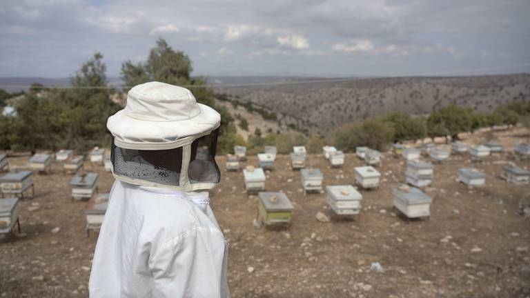 An image that illustrates this article Jordanian beekeeper flourishes despite harsh conditions