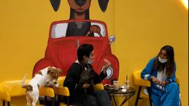 The Barking Lot: Riyadh's first dog cafe opens its doors