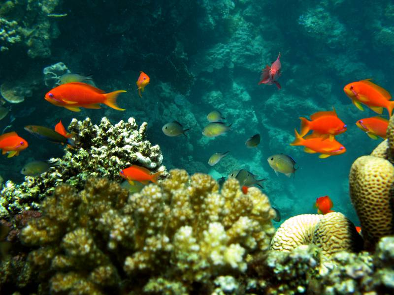 Fish swim among coral reefs off the Obhor coast, 30 kms north of the Red Sea city of Jeddah, on June 2, 2008. AFP PHOTO/HASSAN AMMAR / AFP PHOTO / HASSAN AMMAR