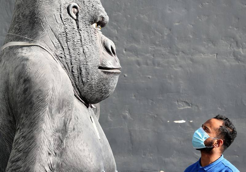 Dubai, United Arab Emirates - Reporter: N/A. News. Coronavirus/Covid-19. A man stares up at a statue of a gorilla with a mask on to prevent the spread of Covid-19. Wednesday, October 21st, 2020. Dubai. Chris Whiteoak / The National