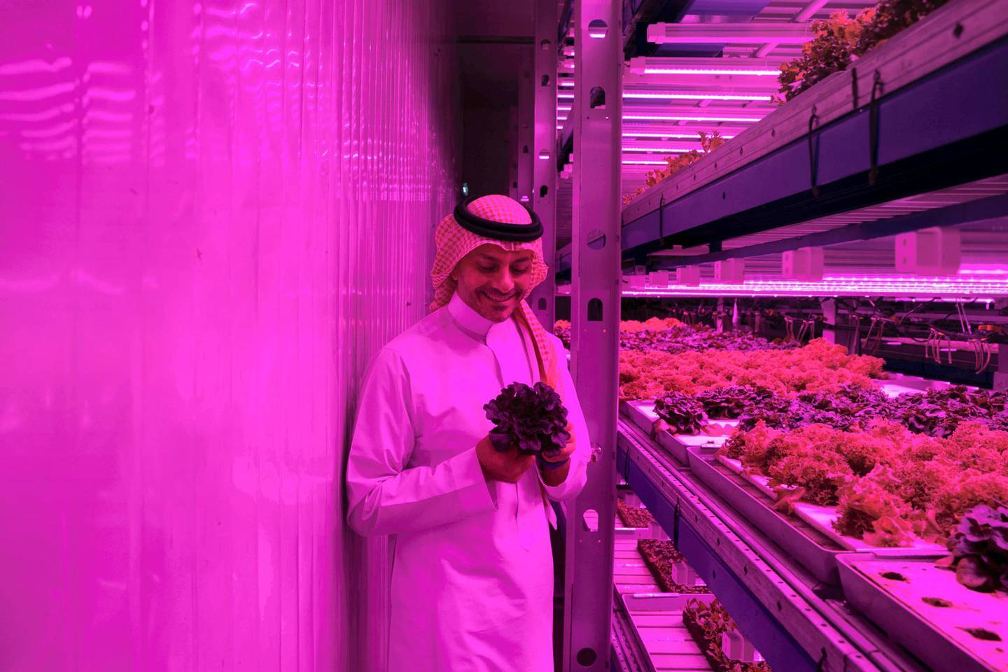 DUBAI, UNITED ARAB EMIRATES - JULY 25, 2018. Badia Farms, established by entrepreneur Omar Al Jundi and British agricultural expert Grahame Dunling, aims to provide a substitute for importing fruits and vegetables into the region from countries thousands of miles away.(Photo by Reem Mohammed/The National)Reporter: Section: BZ