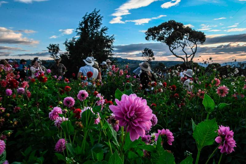 """TOPSHOT - Tourists visit a flower farm in Santa Elena near Medellin, Antioquia Department, Colombia, on August 10, 2019, on the eve of the traditional """"Silleteros"""" parade which is held as part of the Flower Festival.  / AFP / Joaquin SARMIENTO"""