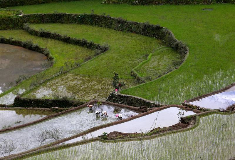 epa06015692 Filipino indigenous Igorot tribe elders plant rice in the terraces in Batad village, Banaue, Ifugao province, Philippines, 20 February 2017. The way of life and world heritage rice terraces are disappearing as an exodus of the youth of the area to the cities, has left only the old to care for and continue the tradition. The rice terraces in Ifugao province listed as a World Heritage Site by the United Nations Educational, Scientific and Cultural Organization (UNESCO) were carved into the Ifugao mountains by Batad indigenous people some 2,000 to 6,000 years ago, and are fed by an ancient irrigation system from the upper rain-forests. But now UNESCO has put these indigenous traditions and the terraces on the World Heritage in Danger List. By 2050, the number of people over 65 in Asia is predicted to triple, and while ageing populations are a global issue, Asian nations are at the visible forefront of the change.  EPA/FRANCIS R. MALASIG