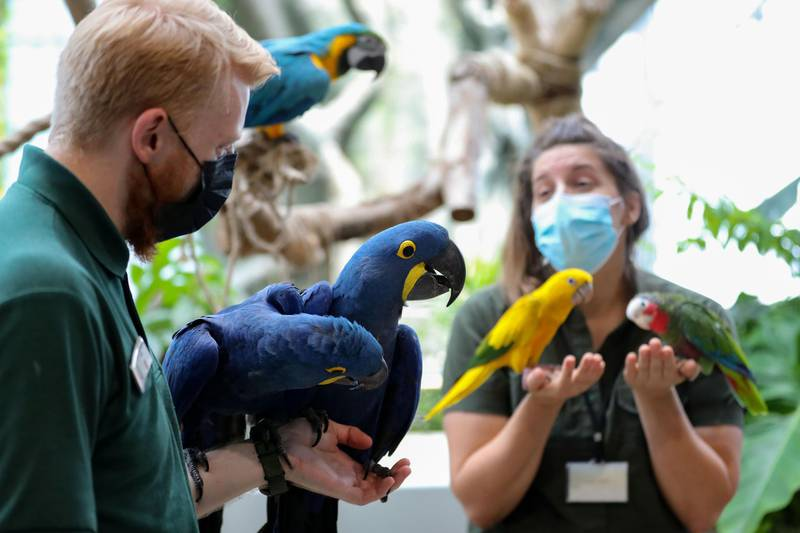 Biologists Elizabeth Hill and Matt Whitlock get ready to weigh different birds at the Green Planet. Weighing is done once a week. A day in the life of keepers at the Green Planet in Dubai on June 16th, 2021. Chris Whiteoak / The National.  Reporter: N/A for Lifestyle