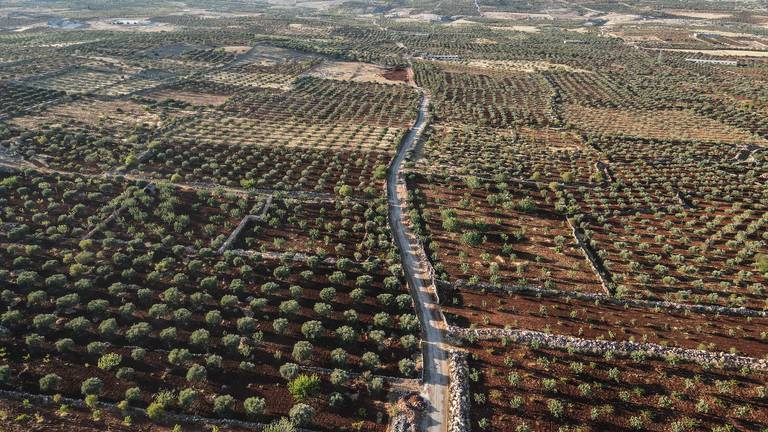 An image that illustrates this article Idlib crops left to rot as Russia-Turkey tensions intensify