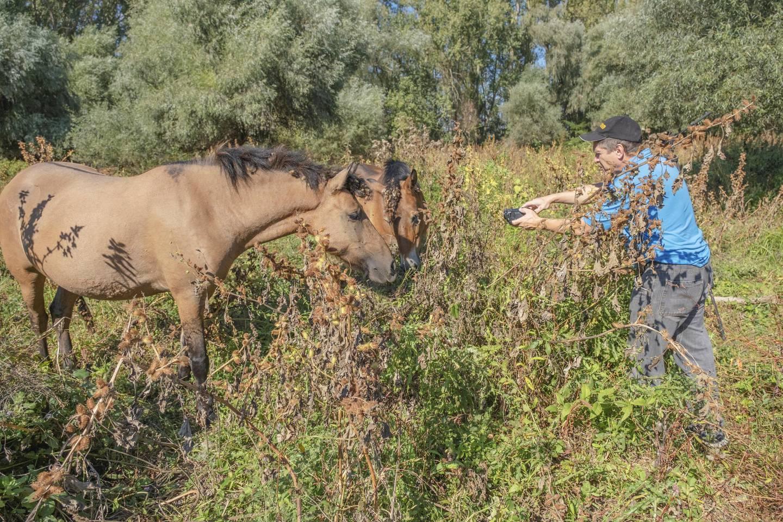 "TATARU ISLAND, UKRAINE - SEPTEMBER 02, 2020: Hutsul horses released Rewilding Europe / Rewilding Ukraine on Tataru island - Regional Landscape Park ""Izmail islands"" - PHOTOGRAPH BY Andrey Nekrasov / Barcroft Studios / Future Publishing (Photo credit should read Andrey Nekrasov/Barcroft Media via Getty Images)"