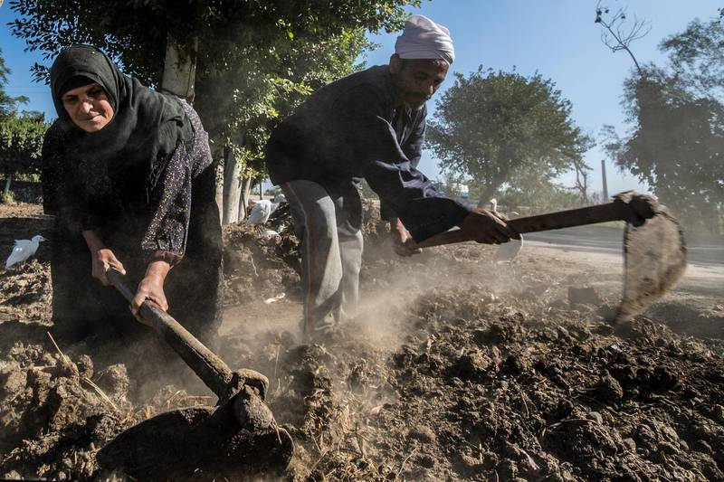 Middle-aged Egyptian farmers Zannuba Mohammed and her husband Karam Shaaban work in their farm in the village of Baharmis, which gets its irrigation water from a canal, supplied by the Nile river on the outskirts of Egypt's Giza province, northwest of the capital Cairo, on December 1, 2019. - Egypt has for years been suffering from a severe water crisis that is largely blamed on population growth. Mounting anxiety has gripped the already-strained farmers as the completion of Ethiopia's gigantic dam on the Blue Nile, a key tributary of the Nile, draws nearer. Egypt views the hydro-electric barrage as an existential threat that could severely reduce its water supply. But Ethiopia insists that Egypt's water share will not be affected. (Photo by Khaled DESOUKI / AFP)