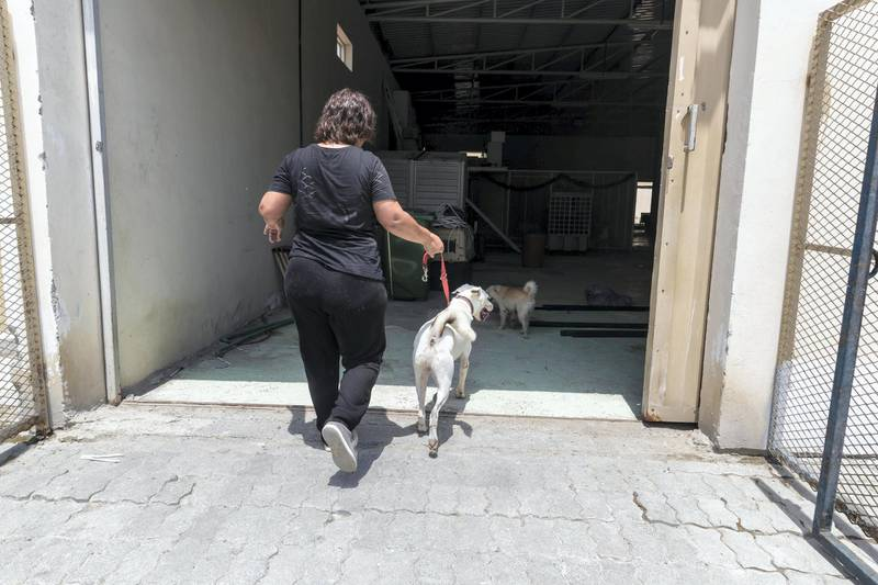 Dog shelters fill up as summer heat rises and rescuers take in more strays. Tour of the dogs helter run by Animals and Us in Fujairah along with Founder Michelle Francis on June 13 th, 2021.Antonie Robertson / The National.Reporter: Kelly Clarke for National.