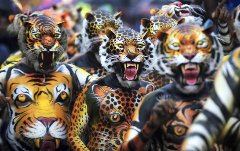 """Indian performers painted as tigers take part in the 'Pulikali', or Tiger dance, in Thrissur on September 7, 2017. - The folk-art event is held every year in the town during the 'Onam' festival. (Photo by ARUN SANKAR / AFP) / """"The erroneous mention[s] appearing in the metadata of this photo by ARUN SANKAR has been modified in AFP systems in the following manner: [September 7, 2017] instead of [September 17, 2016]. Please immediately remove the erroneous mention[s] from all your online services and delete it (them) from your servers. If you have been authorized by AFP to distribute it (them) to third parties, please ensure that the same actions are carried out by them. Failure to promptly comply with these instructions will entail liability on your part for any continued or post notification usage. Therefore we thank you very much for all your attention and prompt action. We are sorry for the inconvenience this notification may cause and remain at your disposal for any further information you may require."""""""
