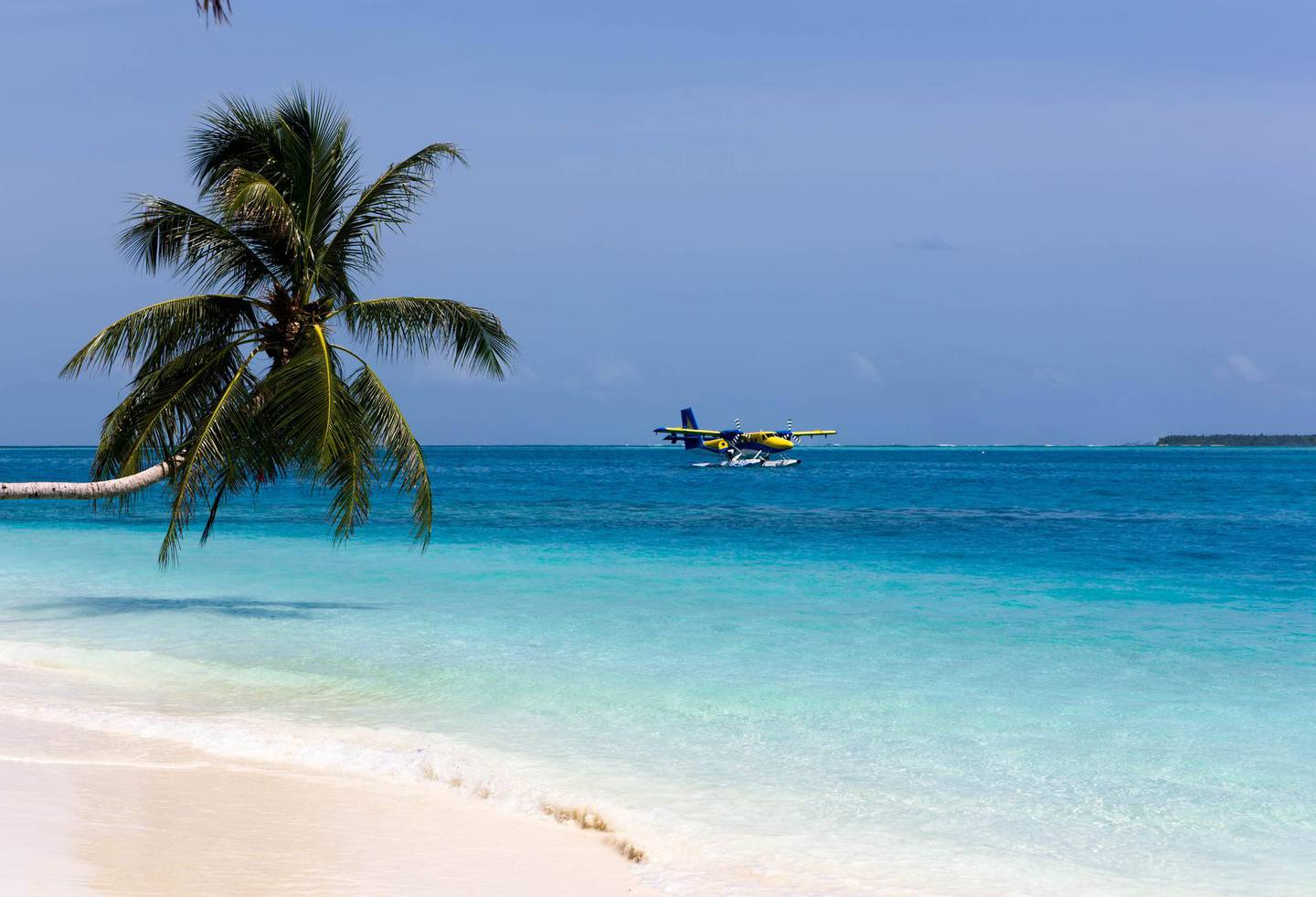 Palmtree leaning over the sea on a  beach with white coral sand while landing a seaplane on the maldive island Conrad-Rangali. Getty Images