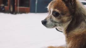 Snow puppies: Dog owners offered the chance to take their pets to play at Ski Dubai