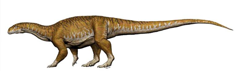 Reconstruction of Ingentia prima from the Late Triassic (205- 210Ma) with a total length 8-10 meters is shown in this handout image of an artist's rendering provided July 9, 2018.        Jorge A. Gonzalez/Handout via REUTERS    ATTENTION EDITORS - THIS IMAGE WAS PROVIDED BY A THIRD PARTY   NO RESALES, NO ARCHIVE