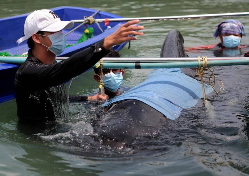 epa06781763 Thai Marine Biologist officials rescue an ailing and immobile short-finned pilot whale at a canal in Songkhla province, southern Thailand, 30 May 2018 (issued 03 June 2018). The short-finned pilot whale reportedly died after swallowing 80 plastic bags weighing 8kg that were found in its stomach after an autopsy.  EPA/STR THAILAND OUT