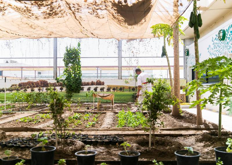 DUBAI, UNITED ARAB EMIRATES. 22 JULY 2020. Plant nursery at Al Awir Central Jail.(Photo: Reem Mohammed/The National)Reporter:Section: