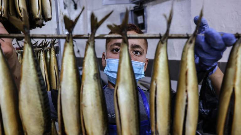 An image that illustrates this article Palestinian youths prepare mackerels for a fish market - in pictures
