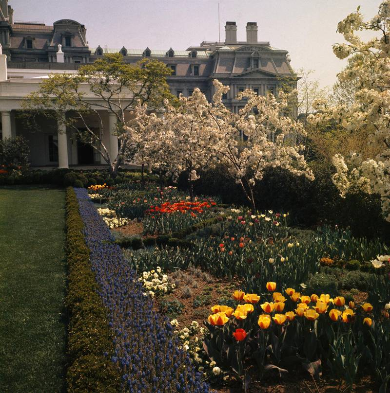 Flowers are in full bloom in the White House Rose Garden, Washington, DC, on April 27, 1963. (Photo by Bettmann via Getty Images)
