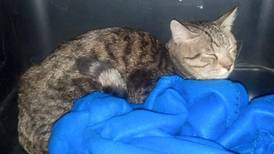 Cat lost en route from Abu Dhabi to JFK found alive