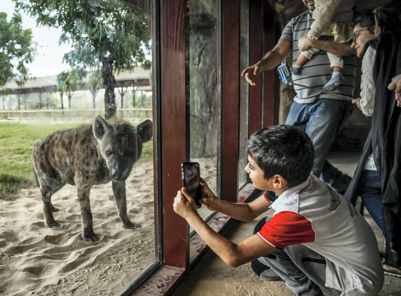 December 12, 2017.   Dubai Safari, Al Awir Road.  Media tour of the Dubai Safari.  Zoo visitors take some photos of the Hyena. Victor Besa for The NationalNationalReporter:  Nick Webster
