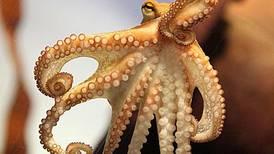 Paul the Octopus' successor makes public debut