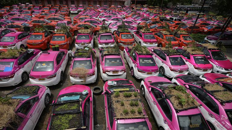 An image that illustrates this article Thai taxis turned into mini gardens to raise awareness of drivers' plight - in pictures