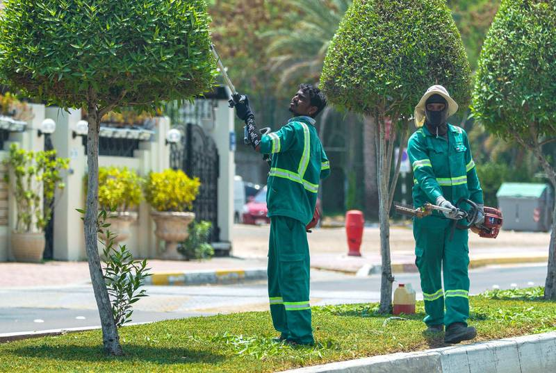 Abu Dhabi, United Arab Emirates, June 3, 2020.   Municipality gardeners trim some trees along the Corniche in preparation for the eventual reopening of Abu Dhabi.Victor Besa  / The NationalSection:  Standalone / Stock