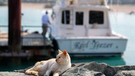 UAE campaigners dismayed at surge in owners dumping pets