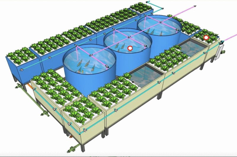 A new farm has been designed to include three kinds of agriculture, the traditional, the hydroponics and the aquaponics. Courtesy Dubai Police