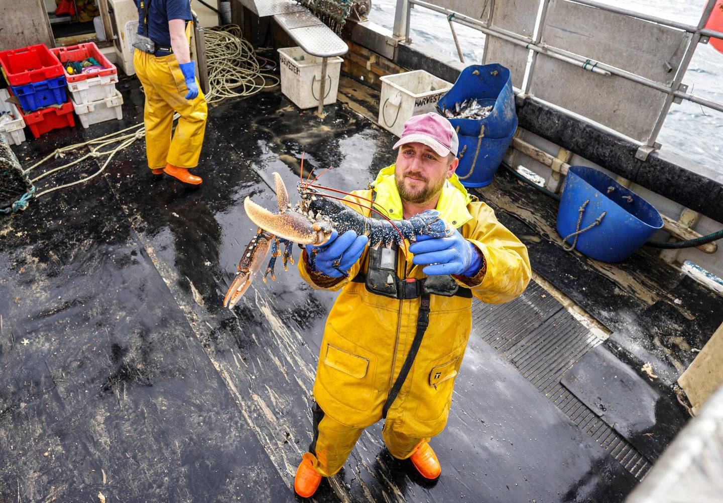 FALMOUTH, ENGLAND - MARCH 17: Crew member Paul Laity poses with a lobster on the Harvester II fishing trawler working four miles off The Manacles rocks on March 17, 2021 in Falmouth, Cornwall, England. The owners of Harvester II now sell their crab, lobster and fish exclusively to local markets. Still keen to service their traditional sales to EU customers who appreciate their produce, the fisherman expect the current Brexit export difficulties to continue for several months which has led the drive to find local sales to fishmongers, restaurants when the Covid lockdown ends, and direct to the general public.  (Photo by Hugh Hastings/Getty Images)