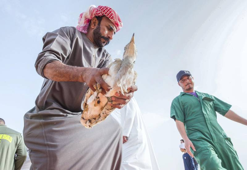 AL AIN, UNITED ARAB EMIRATES - IFHC staff preparing for the release of the Houbara bird at the release of 50 Houbara birds into their Habitat of the UAE desert by The International Fund for Houbara Conservation (IFHC).  Leslie Pableo for The National