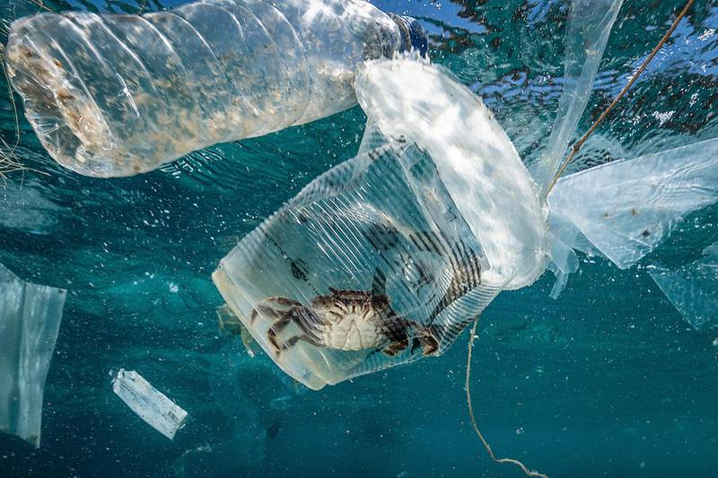 epa07430366 A handout photo made available by Greenpeace shows a crab stuck in plastic in Verde Island Passage, Batangas City, Philippines, 07 March 2019 (issued 12 March 2019). According to a data from the Global Alliance for Incinerator Alternatives (GAIA), Filipinos dispose 163 million pieces of single-use plastic sachets daily. An underwater exploration conducted by Greenpeace in Batangas, Philippines, single-use plastic sachets were found between, beneath, and on the corals and seabed of Verde Island Passage, the epicenter of marine biodiversity in the world.  EPA/NOEL GUEVARA/GREENPEACE HANDOUT  HANDOUT EDITORIAL USE ONLY/NO SALES