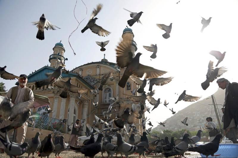 Pigeons fly outside Shah-Do Shamshira Mosque in Kabul, Afghanistan, Tuesday, June 5, 2018. (AP Photo/Rahmat Gul)
