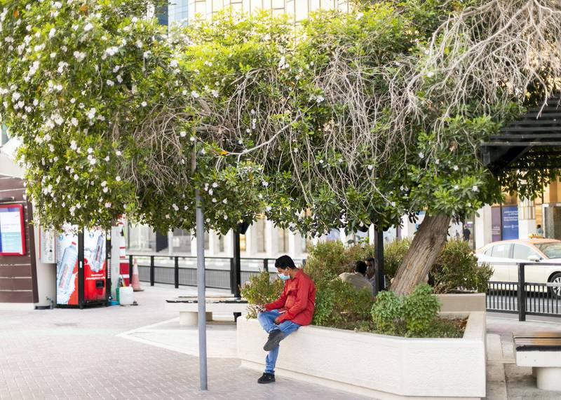 DUBAI, UNITED ARAB EMIRATES. 4 JUNE 2020. A man sits under a tree by Dubai Creek in Deira.(Photo: Reem Mohammed/The National)Reporter:Section: