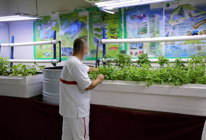An inmate at Dubai Central Jail works on a hydroponic system. Nilanjana Gupta/ The National