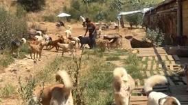 Lebanon's pets abandoned in droves as economic crisis bites