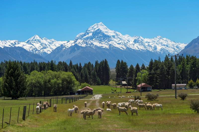 Mount Cook is the highest mountain in New Zealand.