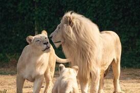 Dubai Safari poised to welcome visitors back on Monday